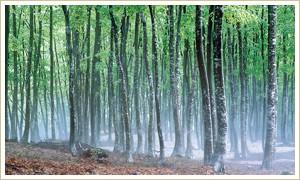 松之山 美人林