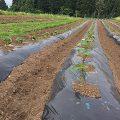 龍氣農園の野菜づくり
