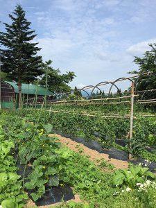 龍氣農園の野菜
