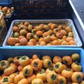 干し柿を作っています!