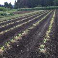 秋採れ野菜