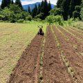 大豆が芽を出してきました