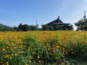 オレンジ色の花たち